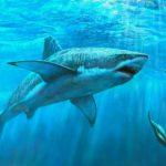 Как получить профит на Форекс – стратегия «Sly Shark»